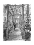 Charles Darwin (1809-188), English Naturalist, in His Greenhouse Giclee Print