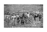 A Wooden, Horse-Powered Suger Cane Crushing Mill, West Indies, 1922 Giclee Print