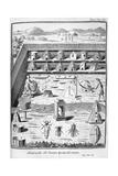 Beekeeping, 1775 Giclee Print