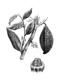 The Chocolate Nut Tree, 1886 Giclee Print