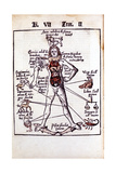 Relationship of the Organs of the Body, the Humours and Signs of the Zodiac, 1508 Giclee Print