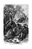 Giant Tortoises of the Galapagos Islands Which Were Observed by Darwin, 1894 Giclée-Druck