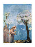 St Francis Preaching to the Birds, 1297-1299, (C1900-192) Giclee Print by  Giotto