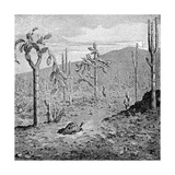 Indefatigable Island, Galapagos Archipelago, 1895 Giclee Print