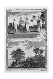 Two Scenes from the Pacific Islands, C1780S Giclee Print by  Page