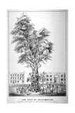 The Tree of Reformation, 1853 Giclee Print by William Carter