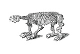 Skeleton of Megatherium, Extinct Giant Ground Sloth, 1833 Giclee Print by  Jackson