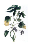 Gossypium - Cotton Plant, 1823 Giclee Print