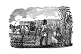 Slaves Harvesting Sugar Cane in Louisiana, 1833 Giclee Print