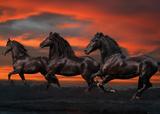 Bob Langrish: Fantasy Horses - Poster