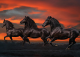 Bob Langrish: Fantasy Horses Photo