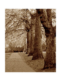 Autumn Stroll I Metal Print by Boyce Watt