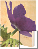 Floral Saturation III Wood Print by Boyce Watt