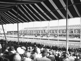 In the Grandstand Photographic Print