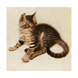 Chessie Giclee Print by Guido Gruenwald