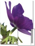 Floral Saturation III Poster by Boyce Watt