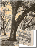 Oak Tree Study Wood Print by Boyce Watt