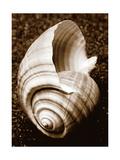 Sea Gallery IV Metal Print by Boyce Watt