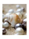 Sea Jewels I Metal Print by Boyce Watt