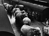 Elephant Train Ride Photographic Print