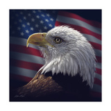 American Bald Eagle Giclee Print by Collin Bogle