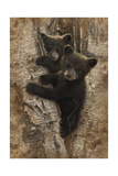 Curious Cubs Giclee Print by Collin Bogle