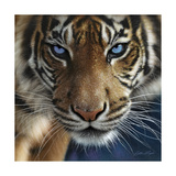 Blue Eyes Giclee Print by Collin Bogle
