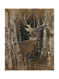Birchwood Buck Print by Collin Bogle