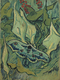 Green Peacock Moth (The Emperor Mot), 1889 Giclee Print by Vincent van Gogh