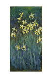 Yellow Irises, 1914-1917 Giclee Print by Claude Monet