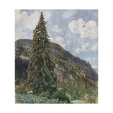 The Old Spruce in Bad Gastein, 1899 Giclee Print by Rudolf von Alt