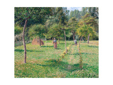 The Orchard at Éragny, 1896 Giclee Print by Camille Pissarro