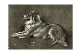 A Sheep Dog, 1901 Giclee Print by Walter Hunt