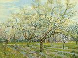 Vincent van Gogh - The White Orchard, 1888 Digitálně vytištěná reprodukce