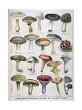 Good and Bad Mushrooms, 1896 Giclée-tryk