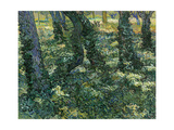 Undergrowth, 1889 Giclee Print by Vincent van Gogh