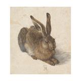 Albrecht Dürer - Zajíc, 1502 Digitálně vytištěná reprodukce
