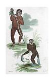 Orang Utang and Gibbon, 1822 Giclee Print