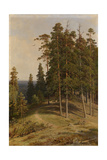 The Pine Forest, 1895 Reproduction procédé giclée par Ivan Ivanovich Shishkin