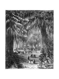 Cypress Grove at Chapultepec, Mexico City, 1877 Giclee Print