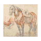 Saddled Horse, C. 1616-1618 Giclee Print by Pieter Paul Rubens