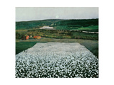 Flower Meadow in the North Giclee Print by Harald Sohlberg