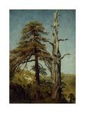 Study of Trees Giclee Print by August Cappelen