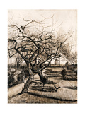 The Parsonage Garden at Nuenen in Winter Giclee Print by Vincent van Gogh