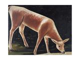 Roe Deer Drinking Giclee Print by Niko Pirosmani