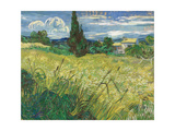 Green Wheat Field with Cypress Giclee Print