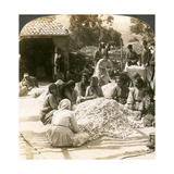 Women Sorting Large Piles of Silk Cocoons, Antioch, Syria, 1900s Giclee Print by  Underwood & Underwood