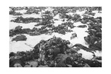 German Soldiers Killed in the Battle of Stalingrad, 1943 Giclee Print