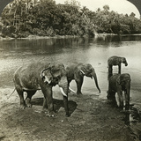 Elephants, Sri Lanka (Ceylo) Photographic Print by  Underwood & Underwood