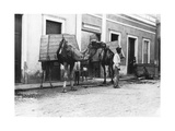 Man with Camels, Las Palmas, Gran Canaria, Canary Islands, Spain, C1920s-C1930s Giclee Print